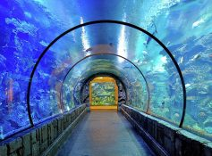 mandalay aquarium best things to do in las vegas